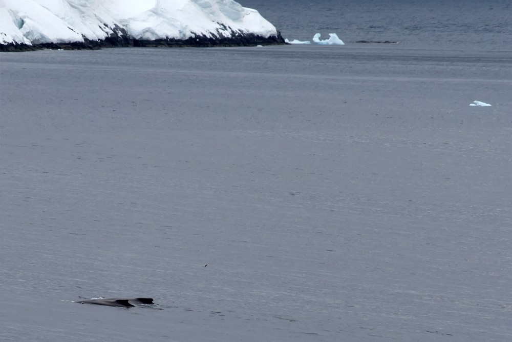 Antarktis / Wale