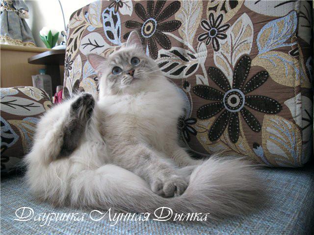 Дауринка, 1 год