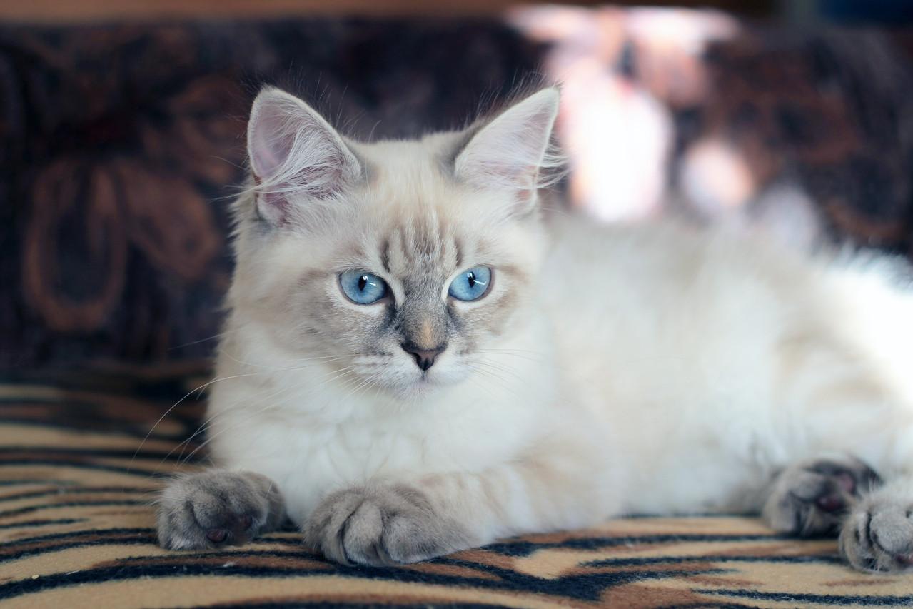 Фелисити, 5.5 месяцев