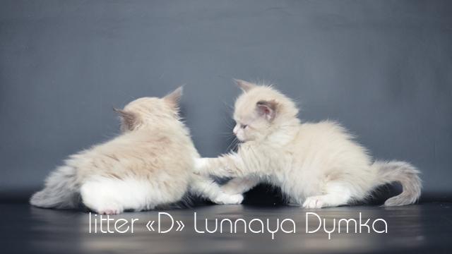 Диона и Диана, 5 недель