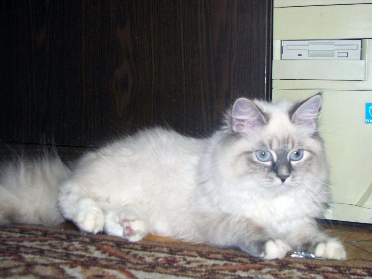 Бонита Лунная Дымка, 1 год