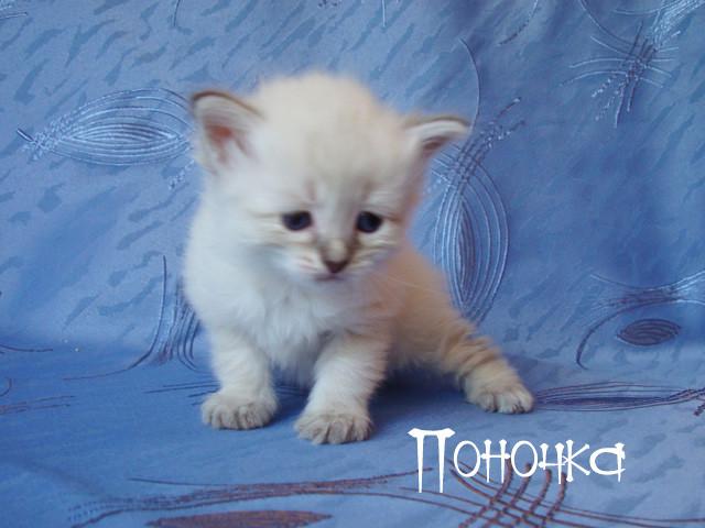 Дауринка, 1 месяц