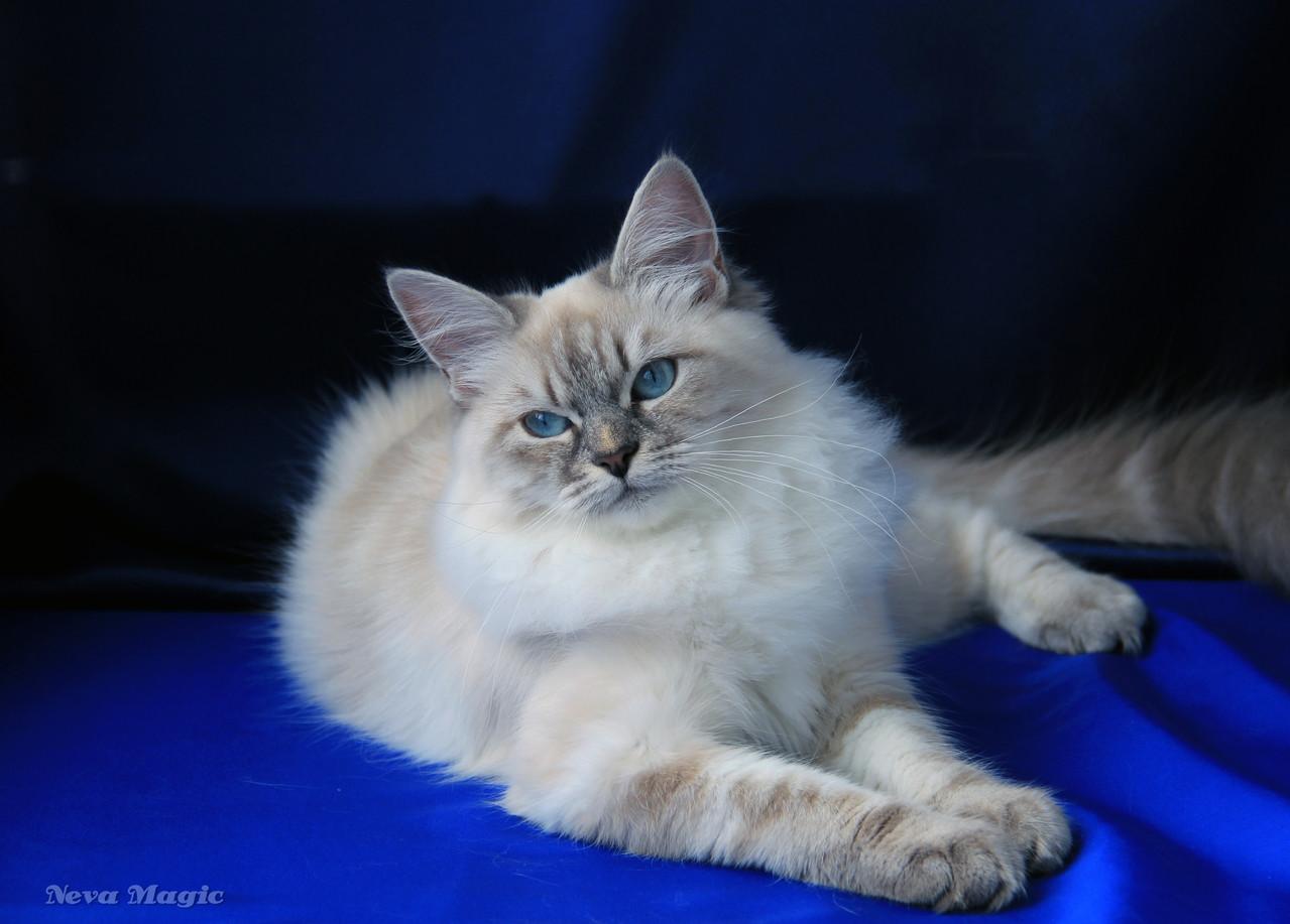 Фелисити, 7 месяцев