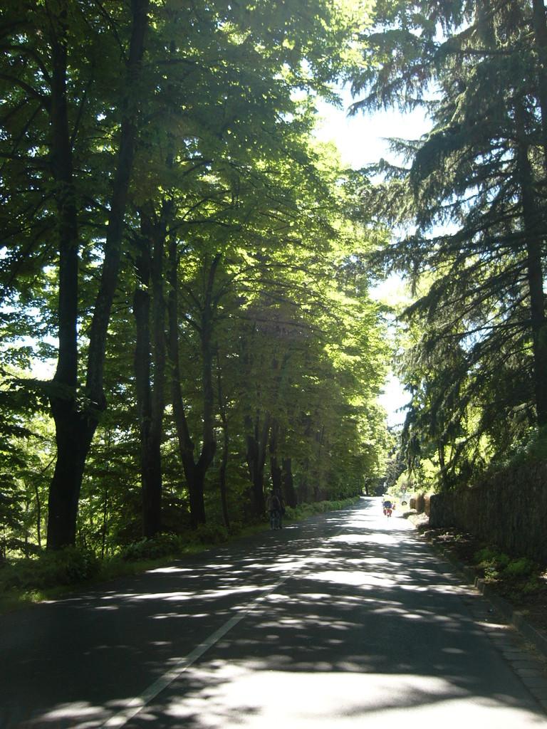 Sul viale oltre Bertinoro  verso l'incrocio per Polenta