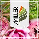 Blumen Miller Trauerfloristen Landkreis Neu-Ulm lexikon-bestattungen