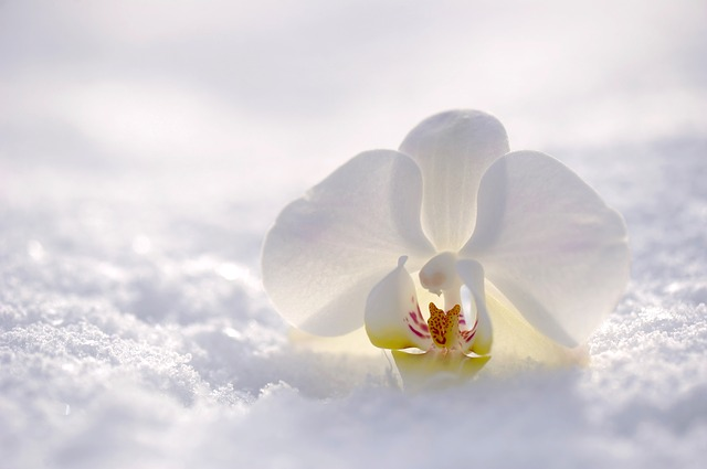 Orchidee (Blumensymbolik) Bestattungslexikon, lexikon-bestattungen, Bestattungsdienste, Bestattungsbedarf