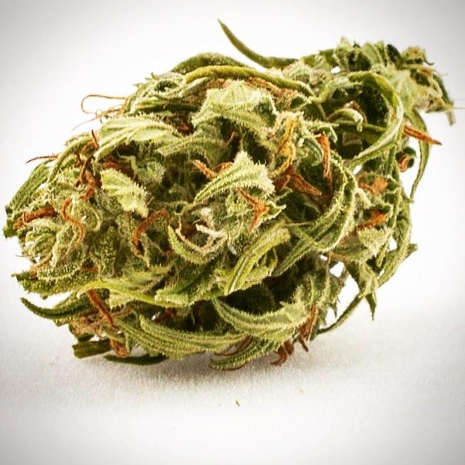 Cannabis Light, Canapa Sativa L.