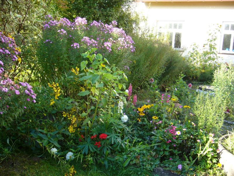 Meine bunte Blumenmischung