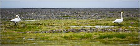 Wildlife Kaldidalur (Ok, húsafell, hadegisfell, Prestahnúkur, Þórisjökull, trekking, wandern, gps, lambafoss, reykholt)