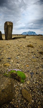 Ódáðahraun, Odadahraun, Summer, Sommer, Trekking, Zelten, Wandern, Primordial Landscapes, Herðubreið, Herdubreid, Lambagras