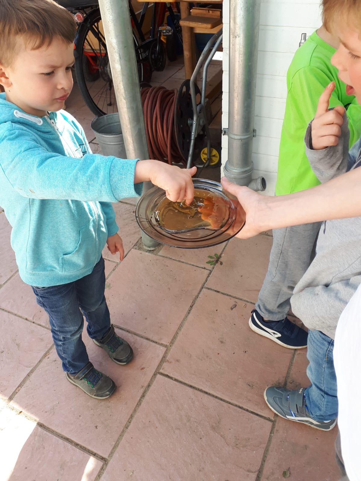 Die Kita-Kinder probieren den Honig.