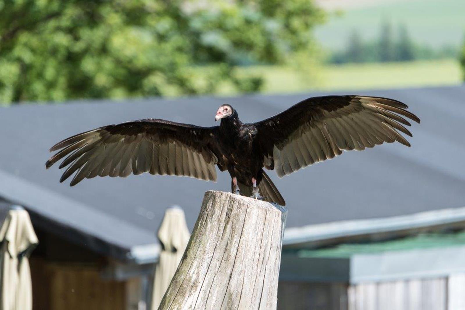 Greifvogelpark Wunsiedel
