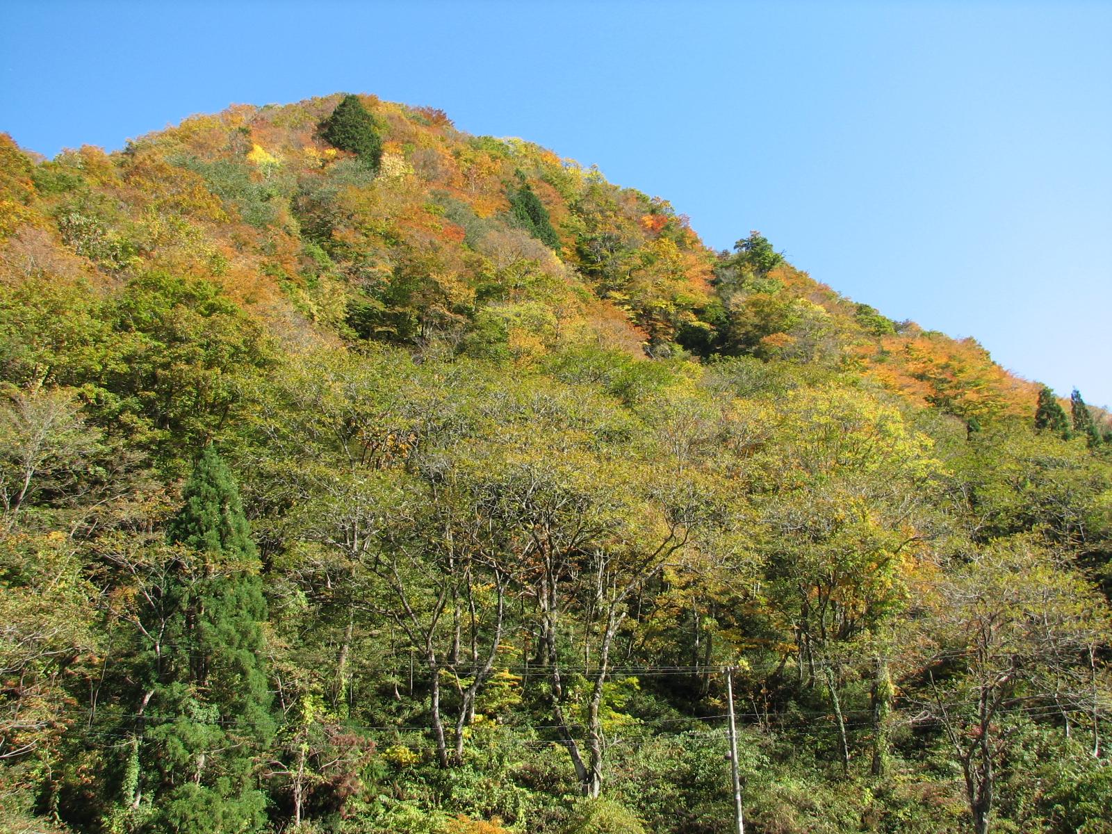 白山トラスト地(石川県白山市) 2008年取得 約22ha