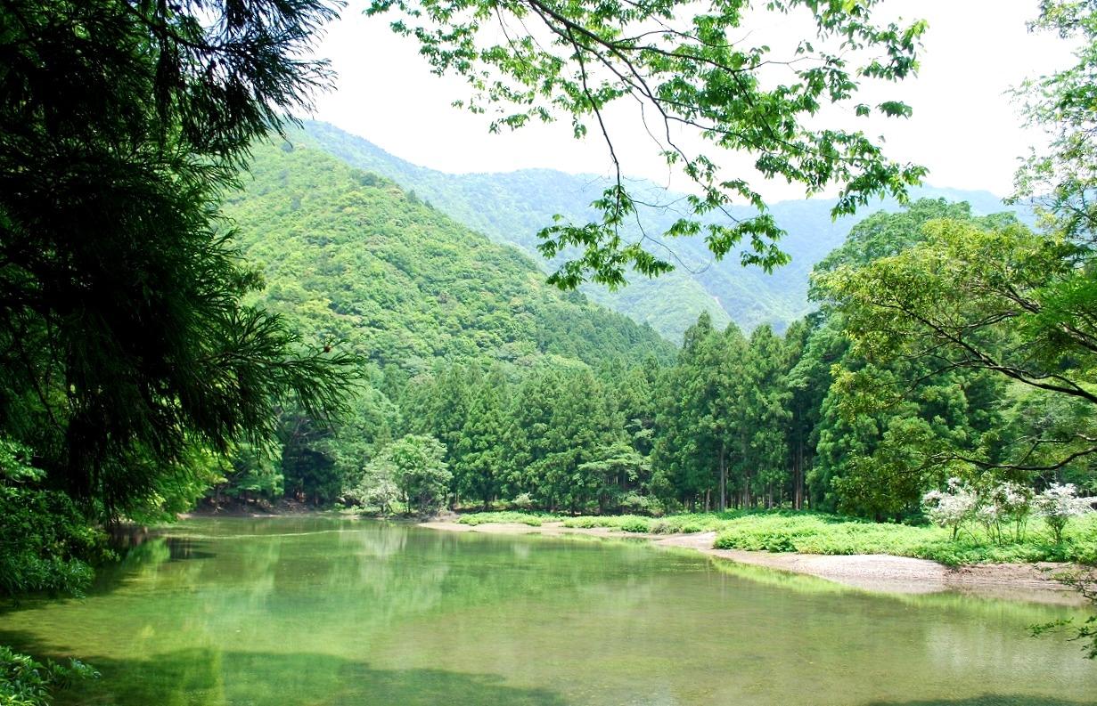 池ノ谷トラスト地(三重県大台町) 2010年取得 約408ha
