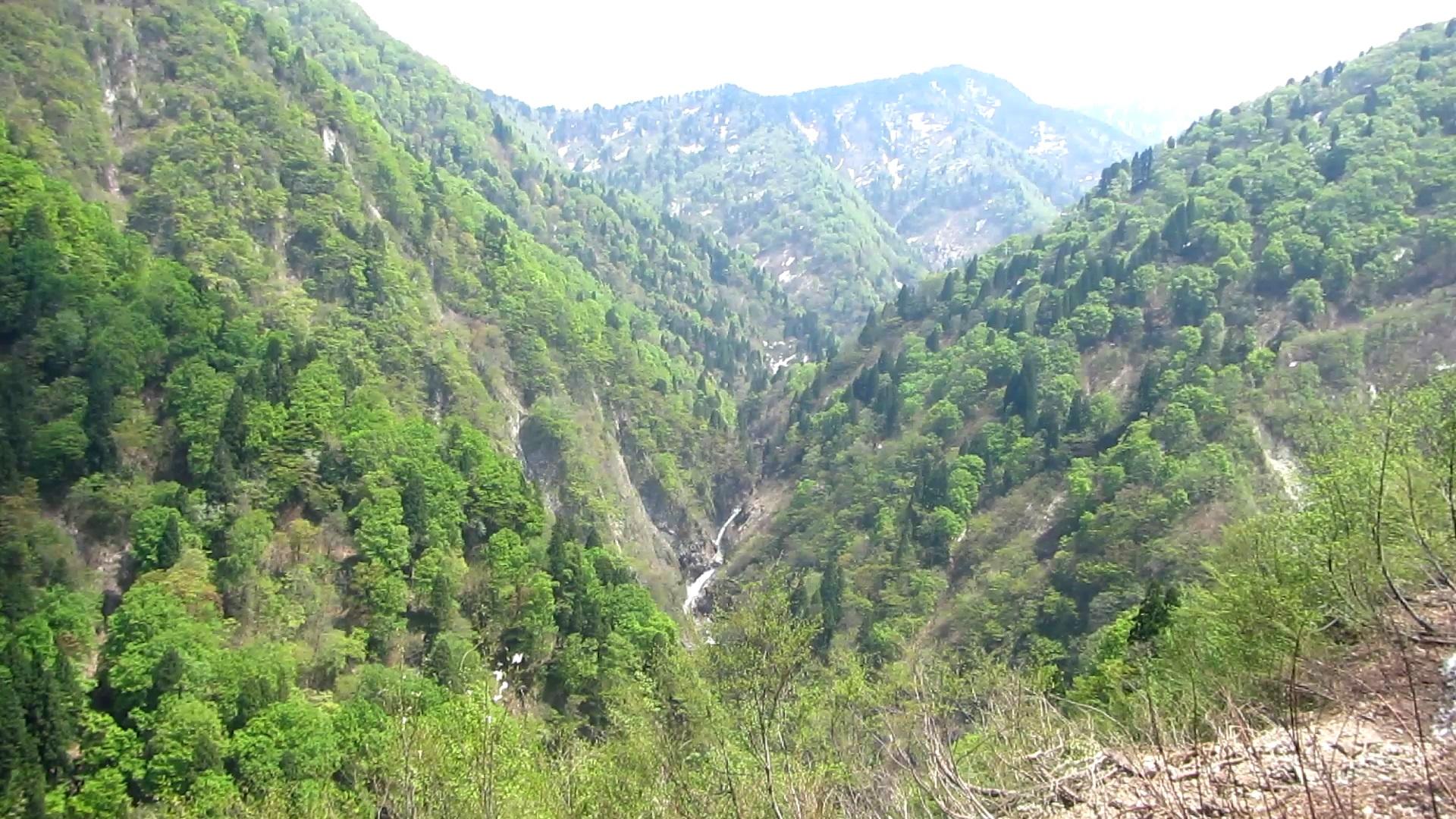 渡邊士乃武自然保護区  上市トラスト地(富山県上市町) 2006年取得 約670ha