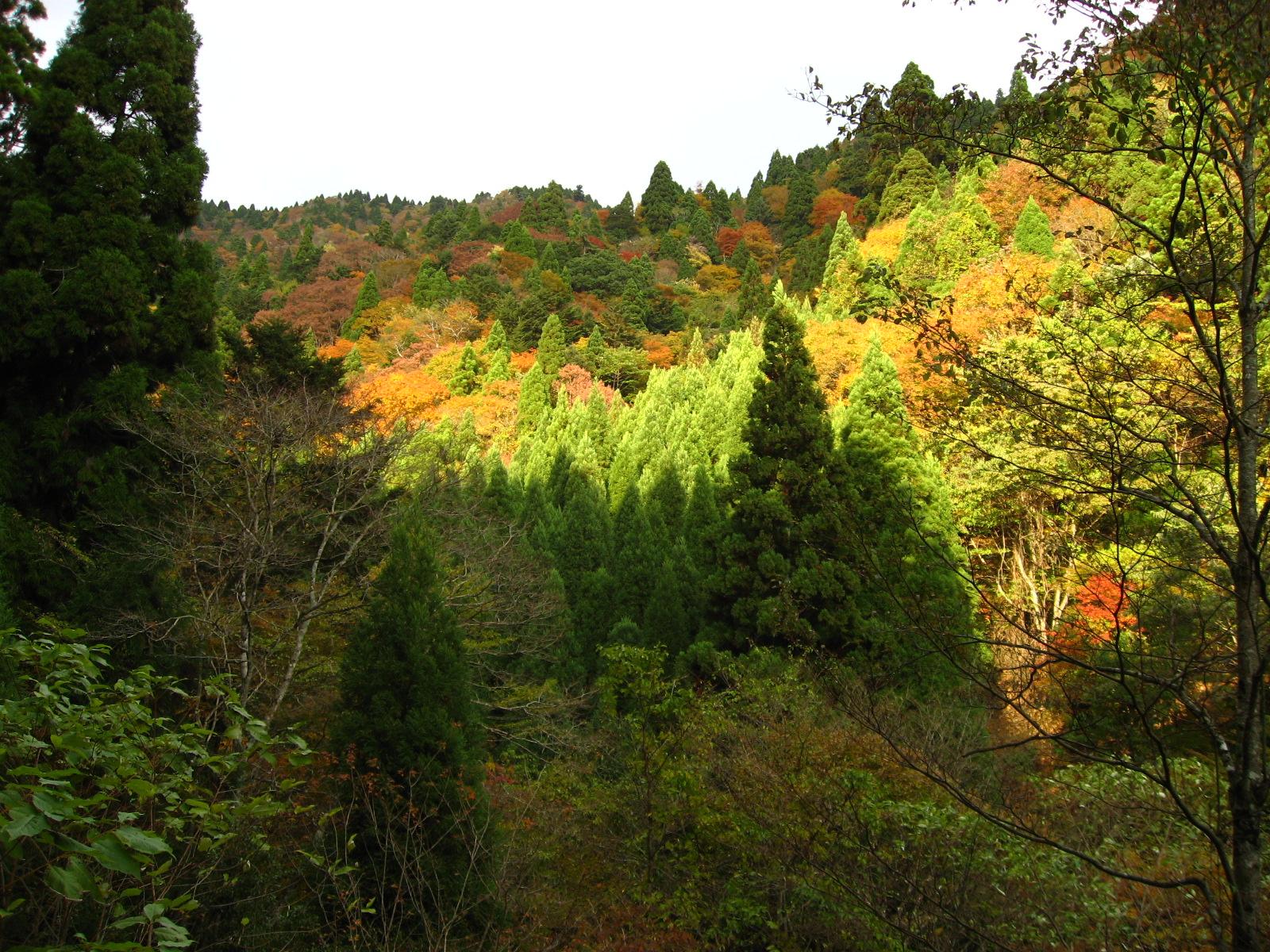 佐保の森 花脊トラスト地(京都府京都市) 2007年取得 約50ha