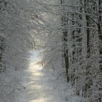 sentiero nel bosco d'inverno tutto ghiacciato