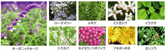 ハーブエキス9種類