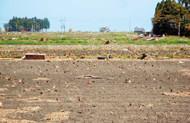 海水を被った南相馬市の田んぼ