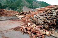バイオマス集積基地。木材市場に並ばないものを利用するために集めています。