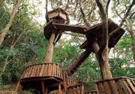 ツリーハウスビルダーの小林崇さんたちが作った大きなツリーハウスも完成