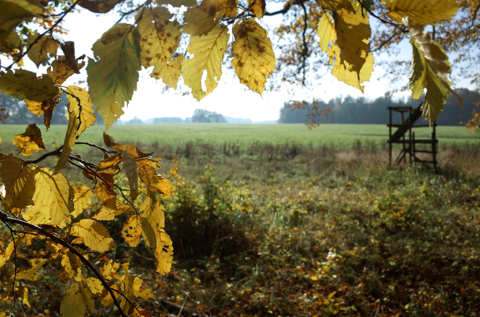 Farbenspiel im Herbst bei Neu Wendorf am 28.10.2015