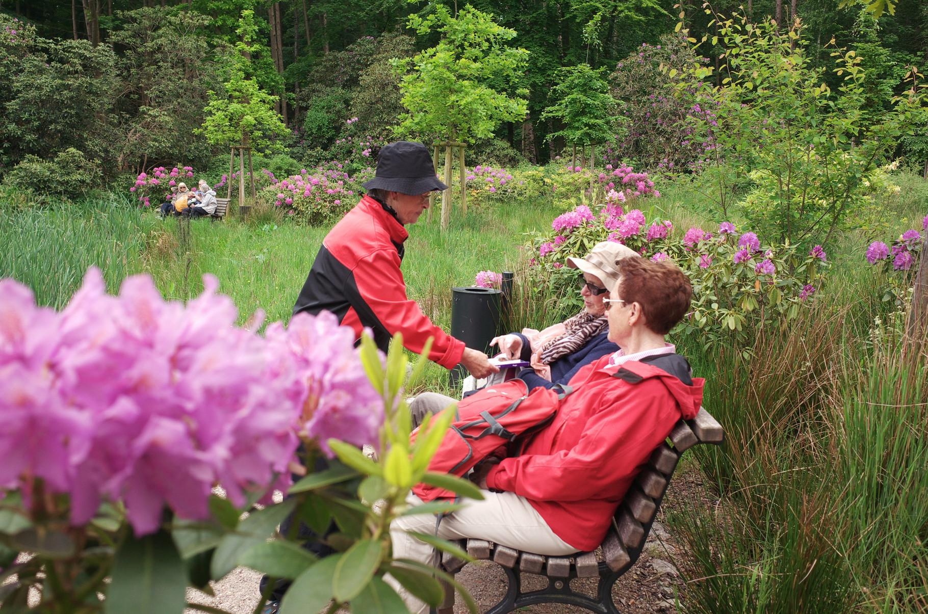 Zur Rhododendronblüte beim Schloss Wiligrad am 31.05.2015