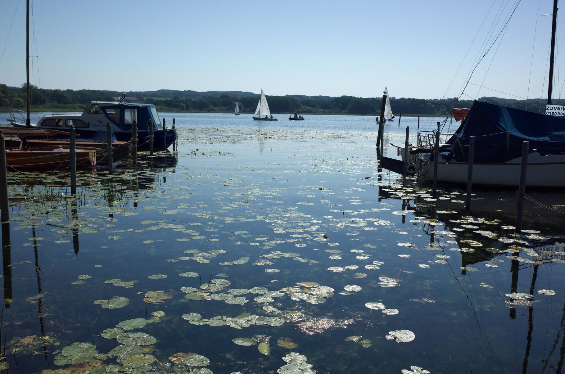 Westufer des Ratzeburger Sees bei Groß Sarau am 22.08.2015