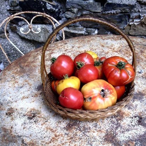 les tomates du jardin #miam