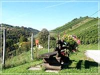 Die Bank am Wegrand im Sausaler Weinbauort Kitzeck lädt zum Verweilen ein.