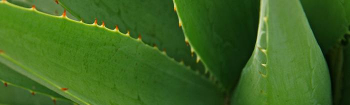 Plantas medicinales para las alergias en la piel