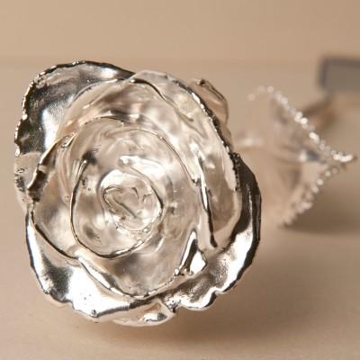 silber-rose