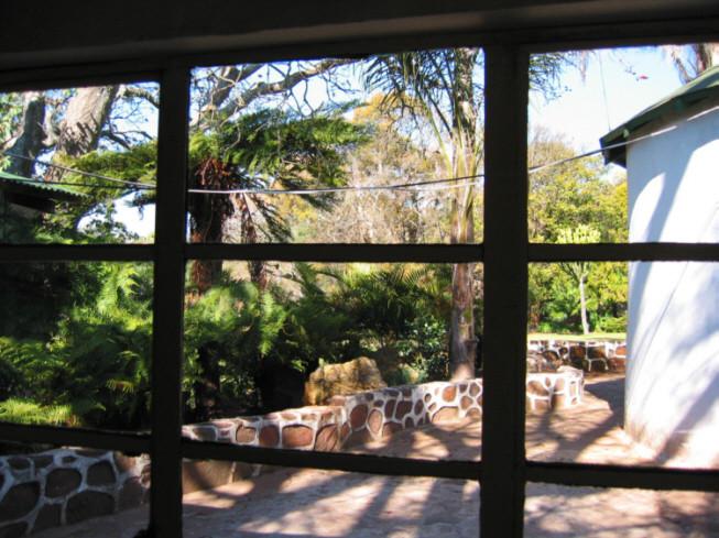vista dalle cucine. felci arborescenti