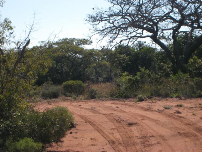 piccolo di Kudu sulla pista machan