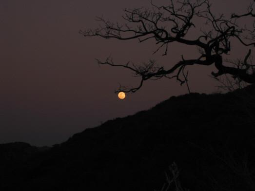 luna africana