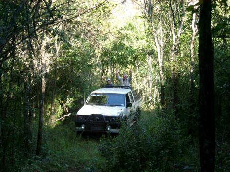 zone di foresta pluviale