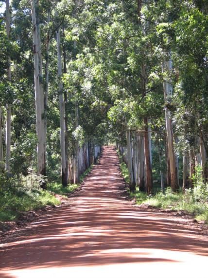 la pista che porta a Ingwe, si chiama Bluegumspoort, pista degli eucalipti