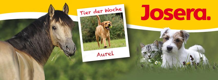 """Aurel ist auf facebook das """"Tier der Woche"""", KW 38 2015"""