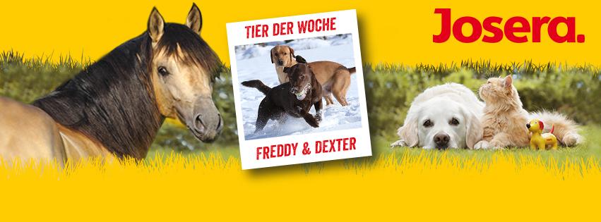 """Freddy & Dexter sind auf facebook """"Tiere der Woche""""  2015"""
