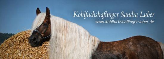 Sandra Luber Haflinger Kohlfuchshaflinger Zucht Hengst Zuchthengst liz. Steiermark Stoffl