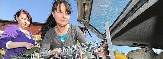 Claudia Schiweck (re.) und Jelena Schäfer kümmern sich um frei lebende Katzen. Auf einem Firmengelände an der Achternbergstraße Rotthausen versorgen sie die Tiere. Foto: Martin Möller / WAZ FotoPool