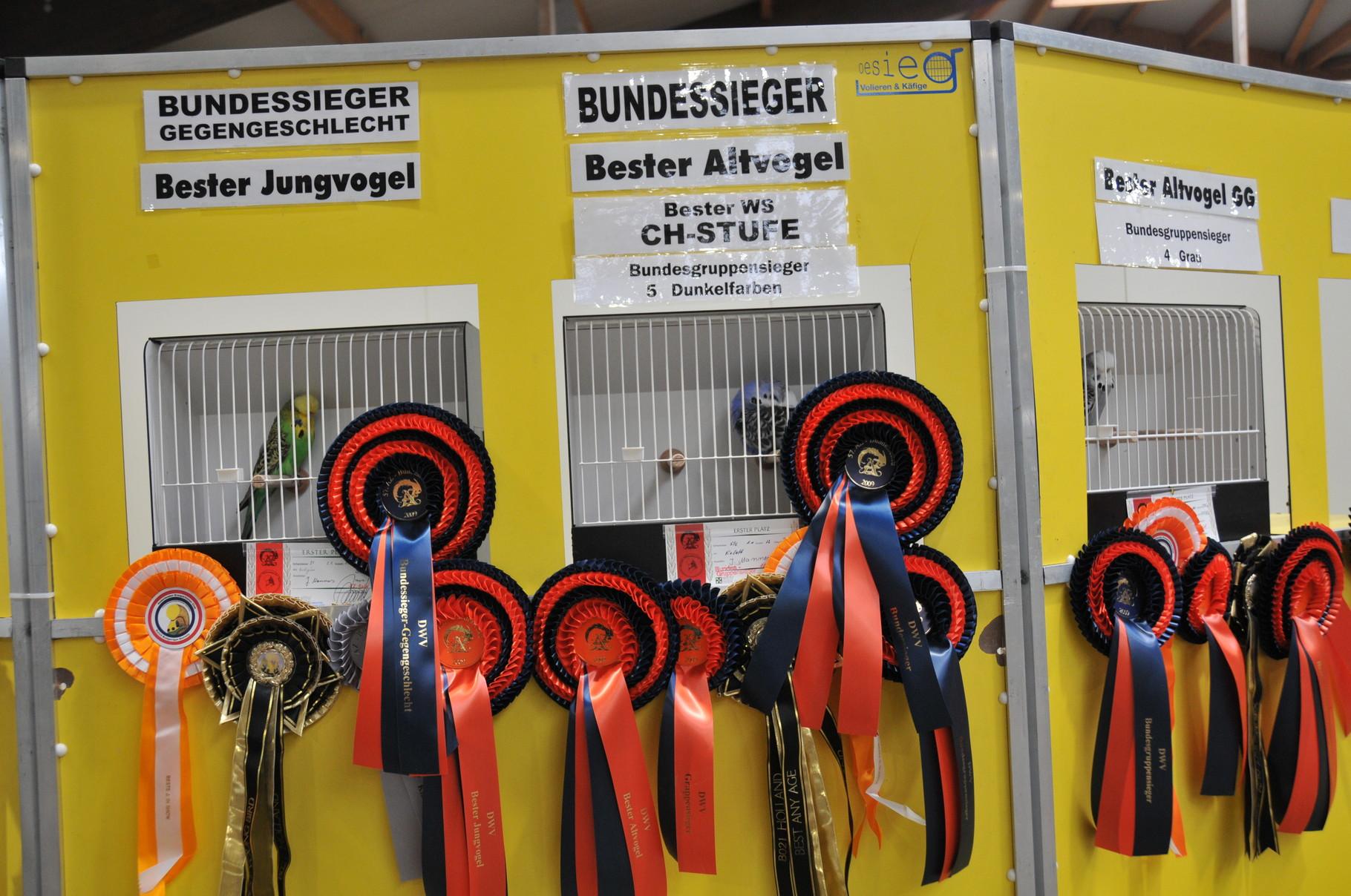 Bundesschau 2009  Schauwellensittiche Siegervögel