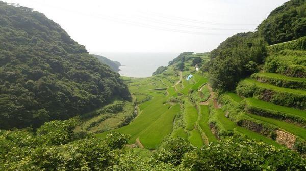 左の写真と同じ日に 急斜面の段々畑がきれいだった。