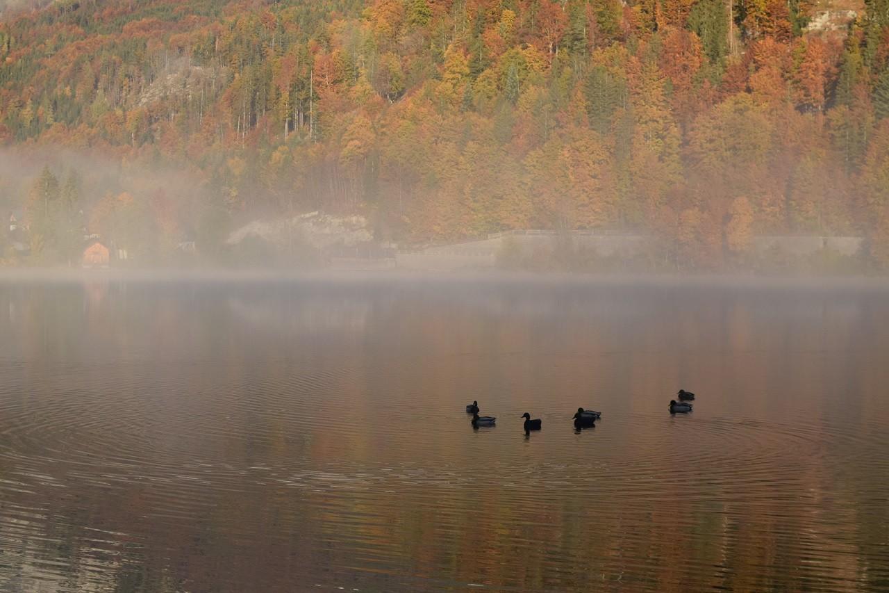 Herbstlicher Morgennebel