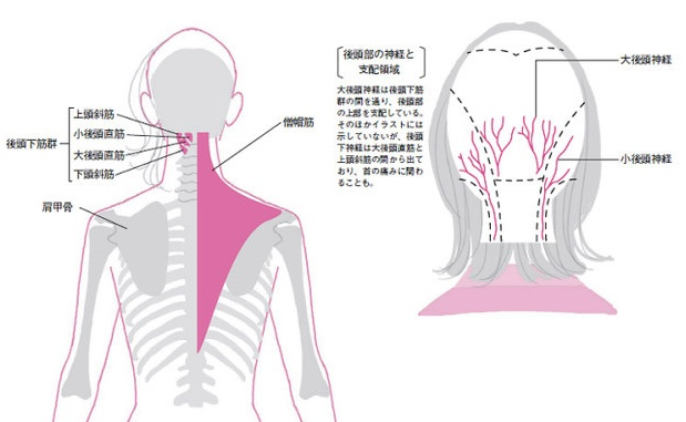 頭痛の原因は頚椎と自律神経
