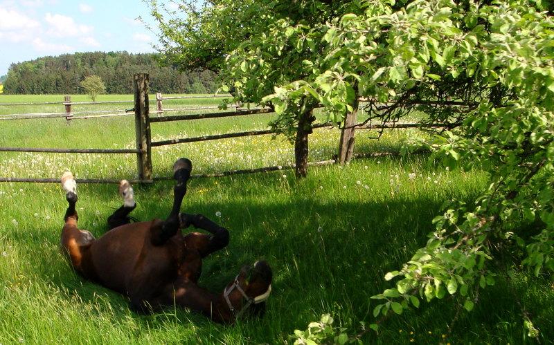 Pferde fühlen sich bei uns pudelwohl