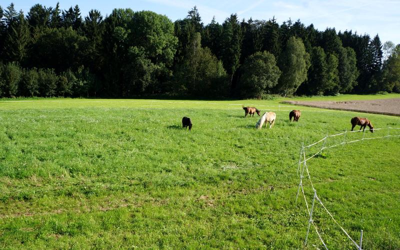 Wechselnde Graskoppeln im Sommer