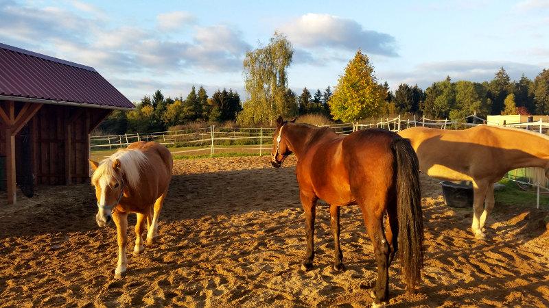 Pferde  (2015)
