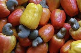 Cashew nuts with fruit