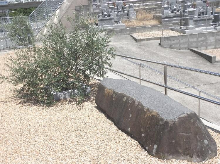 6.オリーブの木と石のベンチ